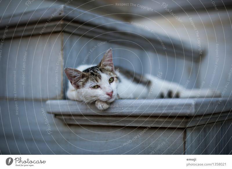 CATCONTENT Tier Haustier Katze Tiergesicht Fell 1 dunkel niedlich faulenzen bequem liegen Pause Farbfoto Außenaufnahme Menschenleer Tag Schwache Tiefenschärfe