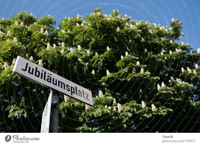 Der Platz für's Jubiläum Frühling Schilder & Markierungen Platz Baden-Württemberg Jubiläum Straßennamenschild Heidelberg