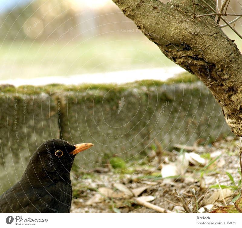 Vogel #xxx Luft gefiedert Schnabel dunkel schwarz braun Tier Sträucher Blatt fliegen Feder Schönes Wetter Himmel Schönwetter Natur Landschaft Ast Pfosten