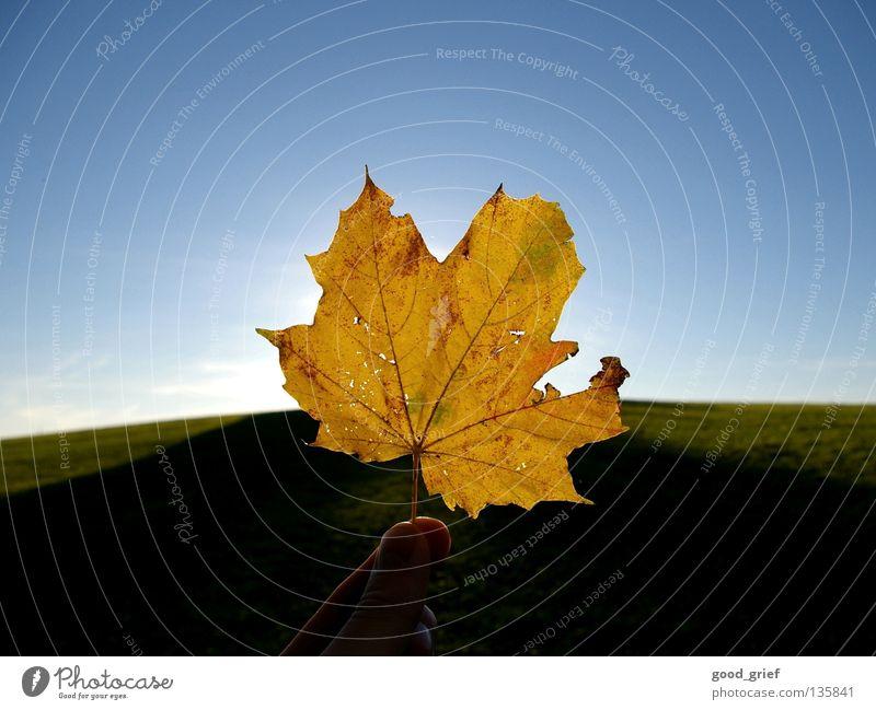 es herbstet sehr Blatt Herbst Ahorn Ahornblatt Sonne Sommer Gefäße Hand Finger Daumen Gras Wiese Hügel Himmel Wolken Wärme Strukturen & Formen leaf sky
