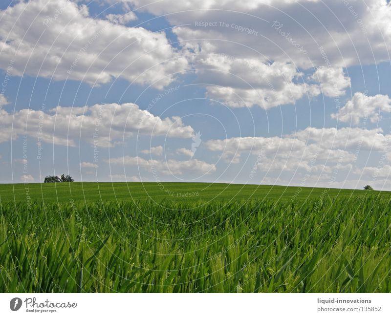 Freiheit I Feld Gras Gerste Baum grün Physik Frühling Kraft frisch saftig Wolken Horizont Himmel Sommer Wärme Natur frei blau