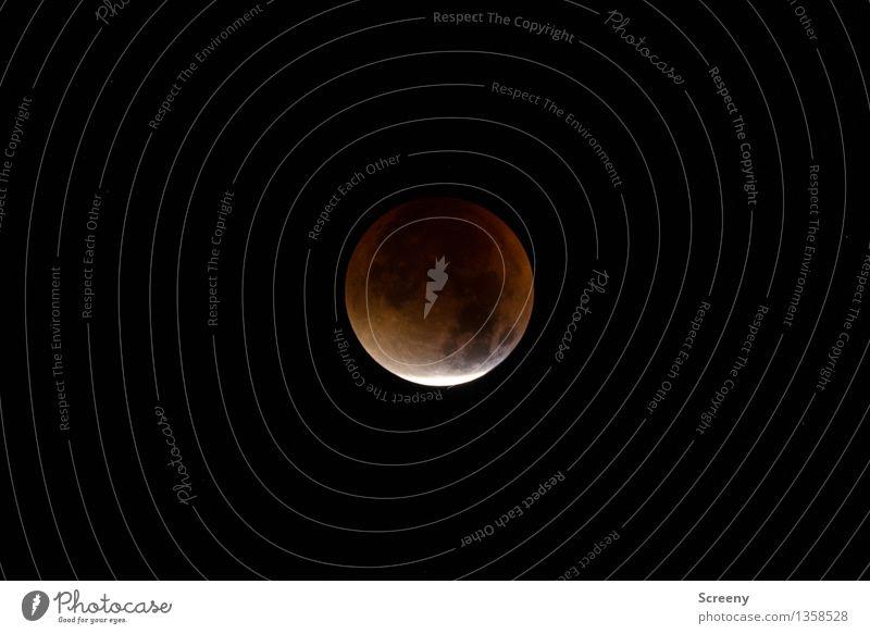 Lunar eclipse Natur Himmel Nachthimmel Mond Mondfinsternis Vollmond rund einzigartig Weltall Korona Farbfoto Außenaufnahme Menschenleer Lichterscheinung Totale