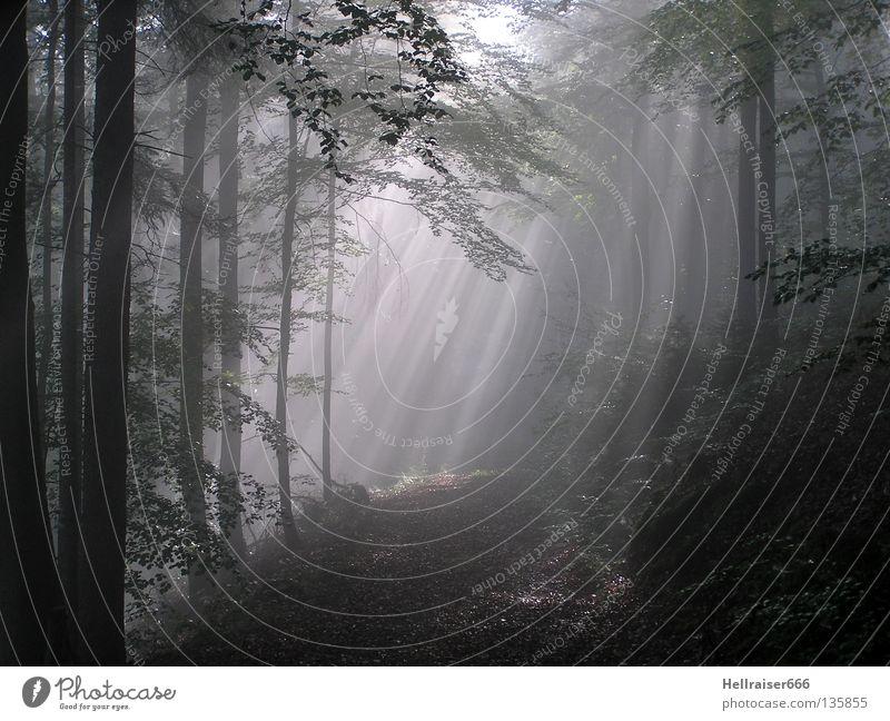 Waldweg Fußweg Waldlichtung dunkel Lichteinfall Herbst Wege & Pfade Weg im Wald Sonneneinstrahlung