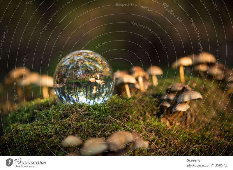 Welten #13 Natur Pflanze Landschaft ruhig Wald Herbst leuchten Idylle Glas Schönes Wetter Gelassenheit Pilz Moos Glaskugel Kristallkugel