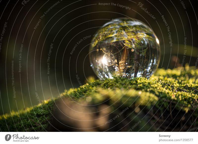 Welten #14 Natur Landschaft Pflanze Sonne Sonnenlicht Sommer Herbst Schönes Wetter Moos Wald Glaskugel Kristallkugel leuchten rund Gelassenheit ruhig Idylle