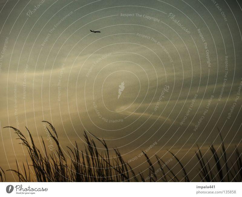 gloomy tuesday Natur Himmel Wolken Gras Wiese Flugzeug fliegen dunkel klein schwarz Verlauf fly away Gedeckte Farben Außenaufnahme Detailaufnahme Abend