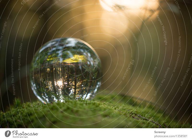 Welten #12 Natur Landschaft Pflanze Sonne Sonnenlicht Sommer Herbst Schönes Wetter Moos Wald Glaskugel Kristallkugel leuchten rund Gelassenheit ruhig Idylle