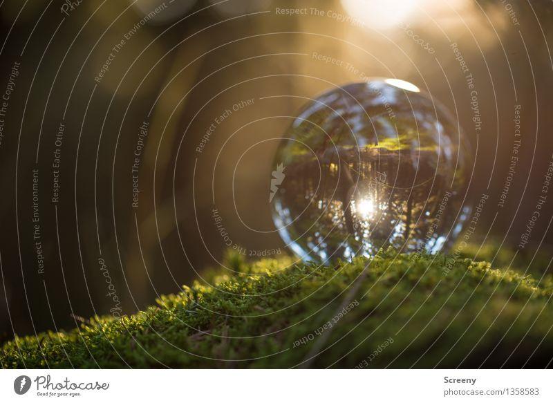 Welten #15 Natur Landschaft Pflanze Sonne Sonnenlicht Sommer Herbst Schönes Wetter Moos Wald Glaskugel Kristallkugel leuchten klein rund Gelassenheit ruhig