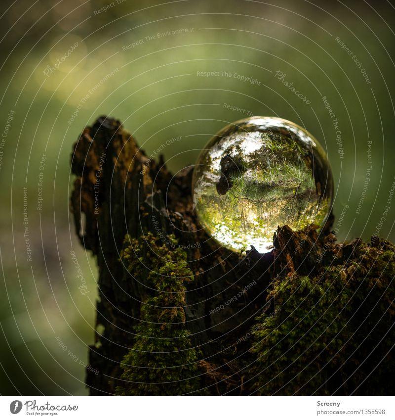Welten #16 Natur Landschaft Pflanze Sonne Sonnenlicht Sommer Herbst Schönes Wetter Moos Baumstumpf Wald Kristallkugel Glaskugel leuchten klein rund Gelassenheit