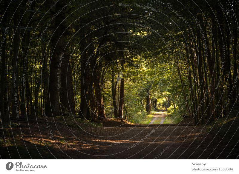Langer Weg... Ausflug wandern Natur Landschaft Pflanze Sommer Baum Sträucher Wald grün Gelassenheit geduldig ruhig Wege & Pfade Farbfoto Außenaufnahme