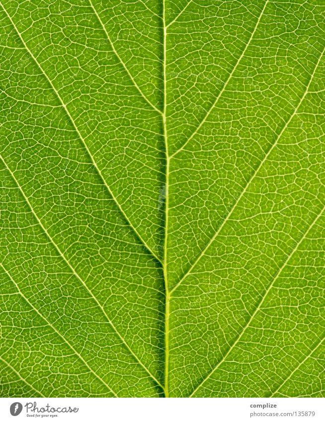 strukturiert Bioprodukte Leben Sommer Umwelt Natur Pflanze Frühling Baum Sträucher Blatt Wurm Linie grün gleich Ordnung Umweltschutz Gefäße Ecke Blattadern