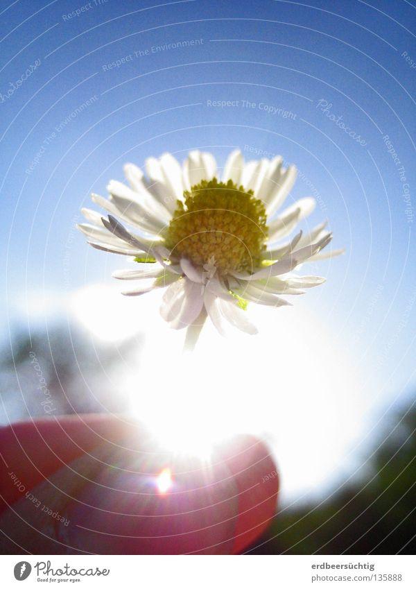 """""""Happy Birthday!"""" Licht schön Finger Luft Himmel Frühling Schönes Wetter Blume Blüte festhalten glänzend hell klein blau gelb grün weiß Vergänglichkeit"""