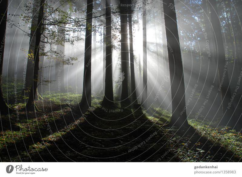 Licht und Schatten Umwelt Natur Pflanze Sonne Nebel Wald Gefühle ruhig Hoffnung Glaube Schüchternheit ästhetisch Kraft Gegenlicht Waldboden Luft Reinheit