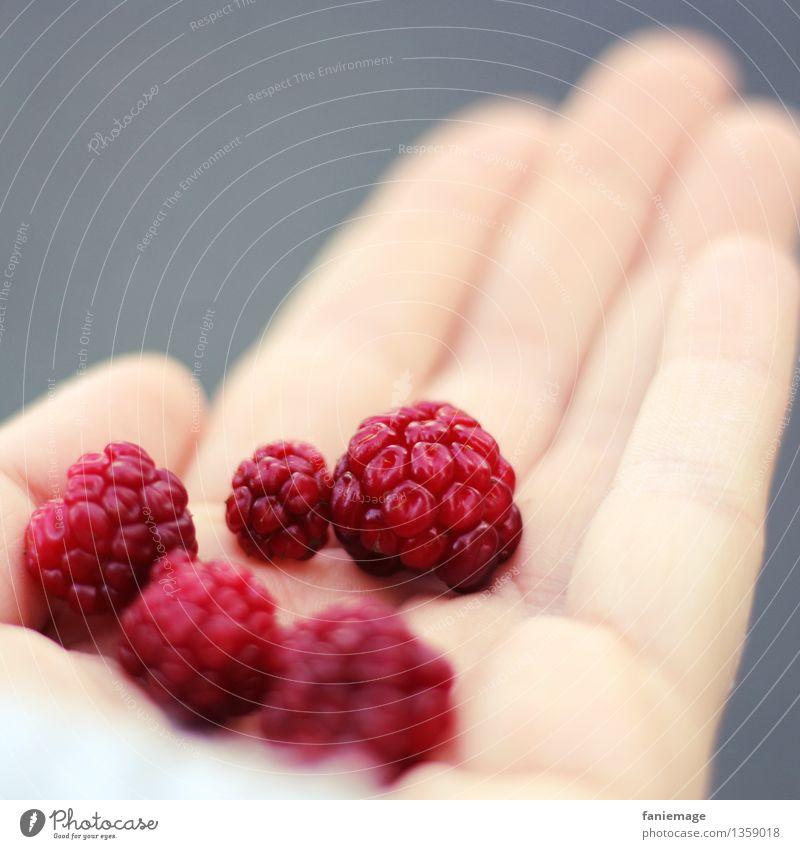 Beeren sammeln Natur Hand rot Gesunde Ernährung Wald Herbst Essen Gesundheit grau Frucht süß Fußweg lecker Bioprodukte Ernte Beeren