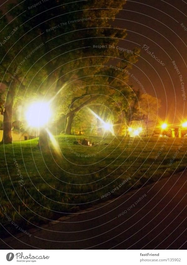 Märchenwald II Baum Dresden Nacht Licht grün Laubbaum Holz Pflanze Blatt Wiese Nebel geheimnisvoll unnatürlich unheimlich Holzmehl Küste Baumstamm Beleuchtung