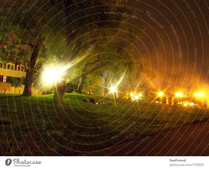 Märchenwald III Baum Dresden Nacht Licht grün Laubbaum Holz Pflanze Blatt Wiese Nebel geheimnisvoll unnatürlich unheimlich Küste Baumstamm Beleuchtung Lampe
