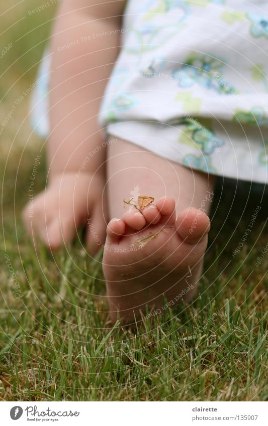 moos-an-fuß Farbfoto mehrfarbig Außenaufnahme Sommer Kind Mensch Baby Kleinkind Arme Hand Beine Fuß 1 0-12 Monate 1-3 Jahre Frühling Gras Wiese Kleid sitzen