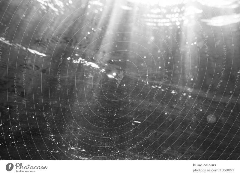 pègre Kunst Kunstwerk ästhetisch Meerwasser Unterwasseraufnahme Unterwasserkamera Unterwasserpflanze Surfen Wellen Licht Lichterscheinung Lichtschein Lichtspiel