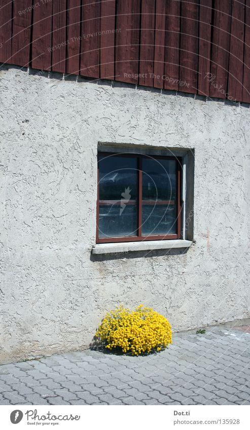 Ferien am Einödhof Pflanze Haus gelb Farbe Wand Fenster Holz grau Gebäude Fassade trist einfach Bauernhof Symmetrie Pflastersteine Anschnitt