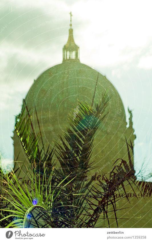 Berliner Dom Hauptstadt Deutschland Oberpfarrkirche zu Berlin Religion & Glaube Kirche Christentum Kuppeldach Reflexion & Spiegelung Fensterscheibe Palme