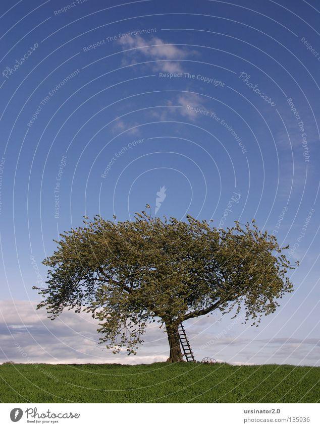 Der Baum 8 alt Himmel weiß grün blau Wolken Ferne Leben Wiese Frühling grau Feld Deutschland Wind Horizont