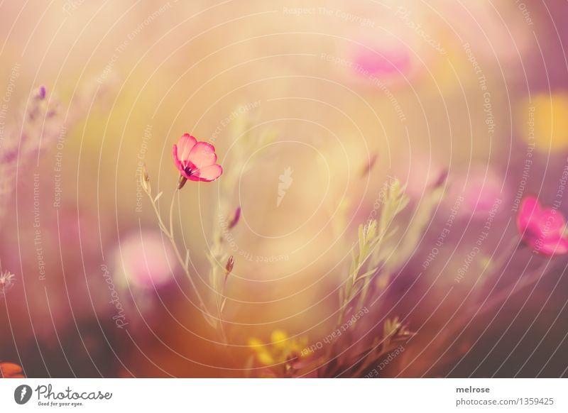 Spätsommerpastell elegant Stil Design Natur Pflanze Herbst Schönes Wetter Blume Gras Sträucher Blatt Blüte Wildpflanze Pflanzenteile Blütenstiel Blumenwiese