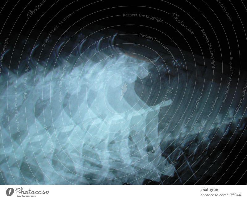 Taurus weiß schwarz Tier dunkel hell Kraft Säugetier Horn 7 Bulle Physik Sternbild