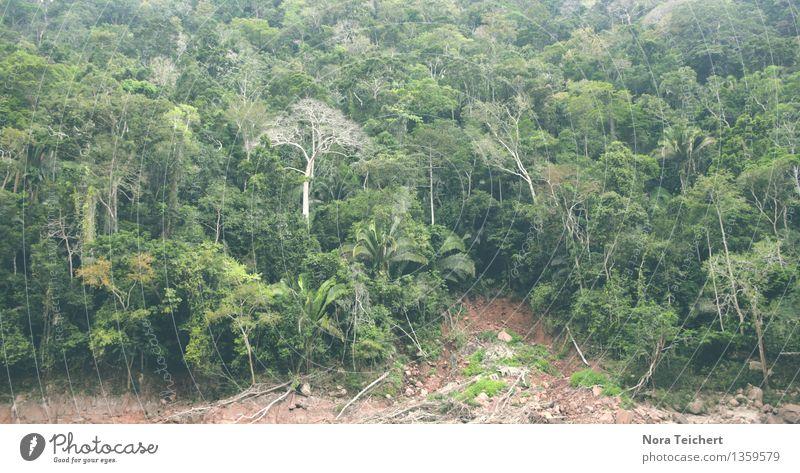 Regenwaldwand Umwelt Natur Landschaft Pflanze Urelemente Erde Sommer schlechtes Wetter Baum Sträucher Blatt Grünpflanze Wildpflanze exotisch Wald Urwald Küste