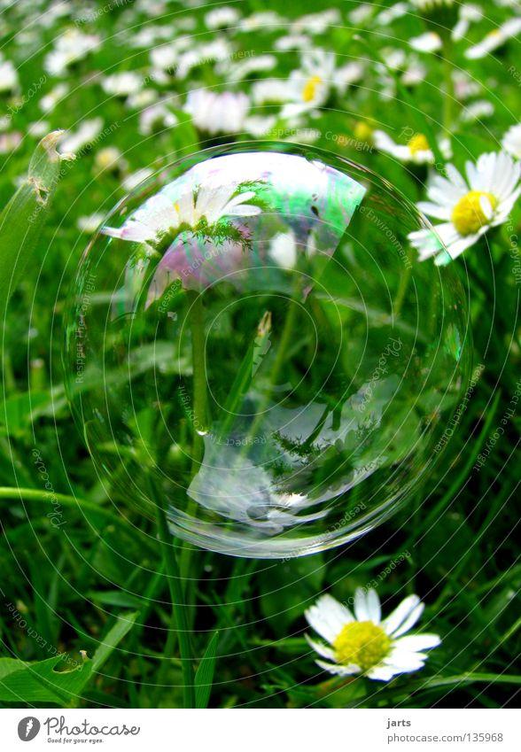kleine welt Wiese Gras Gänseblümchen grün Vergänglichkeit Makroaufnahme Nahaufnahme Siefenblase Blase kleine Welt jarts
