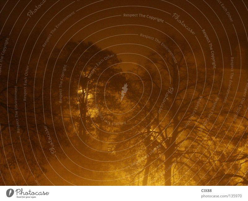 Nebel in der Nacht Park Licht Baum dunkel Langzeitbelichtung Schatten Scheinwerfer