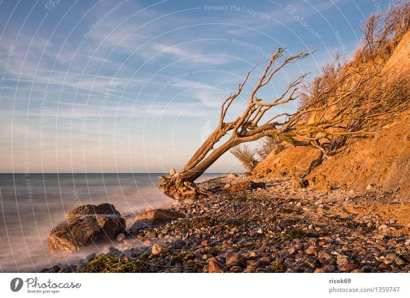 Ostseeküste Natur Ferien & Urlaub & Reisen blau Wasser Meer Landschaft ruhig Wolken Strand Küste Stein Felsen Tourismus Idylle Baumstamm