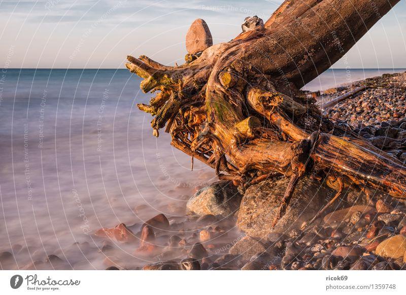 Baumstamm Natur Ferien & Urlaub & Reisen blau Wasser Meer Landschaft ruhig Wolken Strand Küste Stein Felsen Tourismus Idylle Baumstamm Ostsee