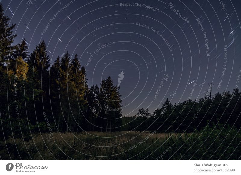 Über allen Wipfeln ist Ruh..... Umwelt Natur Pflanze Himmel Wolkenloser Himmel Nachthimmel Stern Horizont Herbst Schönes Wetter Baum Gras Sträucher Wiese Wald