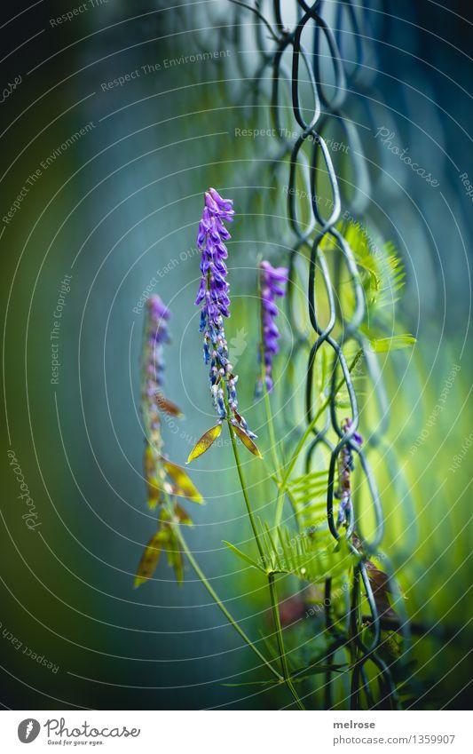 aufstrebend elegant Stil Natur Herbst Schönes Wetter Pflanze Blume Gras Blatt Blüte Wildpflanze Park Zaun Maschendrahtzaun Draht Blühend leuchten träumen