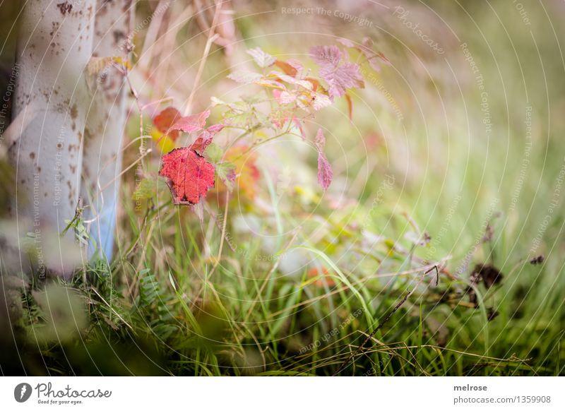 Herbstfarbtupfer elegant Stil Natur Landschaft Schönes Wetter Pflanze Baum Grünpflanze Blatt Pflanzenteile Gräserblüte Gras Farn Wiese Wald Farbfleck Farbe
