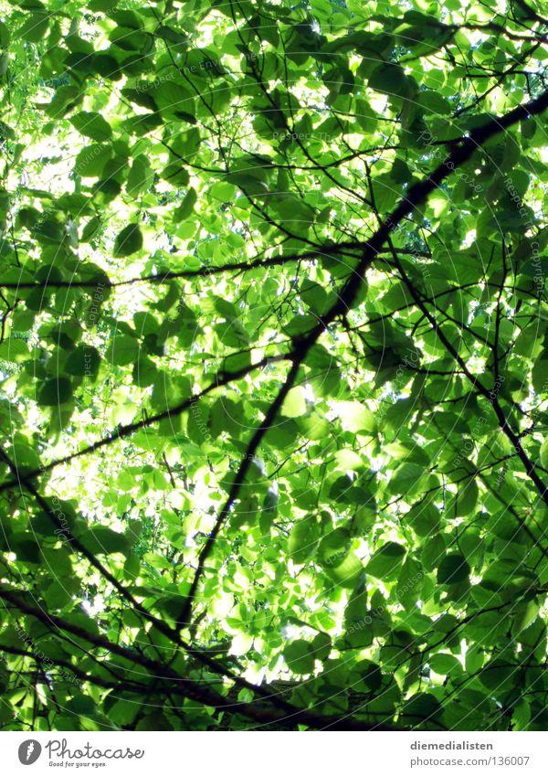 schattenspiel Baum grün Blatt Frühling Dach