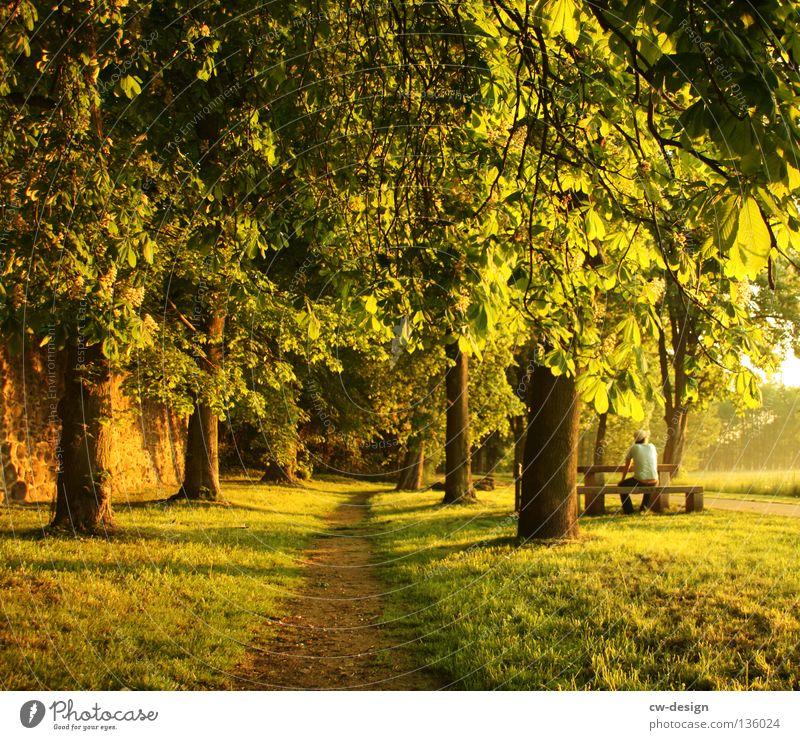 WIR ESSEN ZEITIG! Feld Wiese Nebel Regenschirm Sonnenschirm Mann Gras Grasbüschel Baum Wald Morgen Tau Wassertropfen Schweben rot weiß Halm Pflanze feucht nass