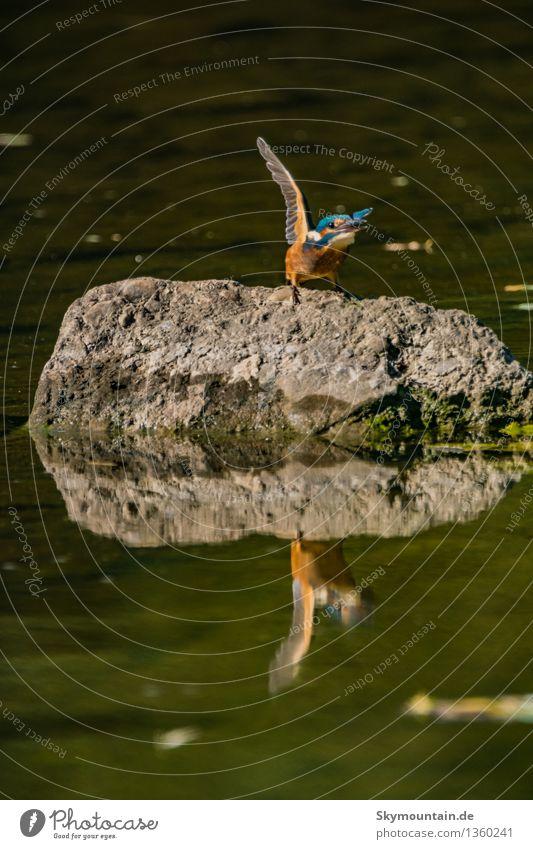 Auf die Plätze fertig los Natur Pflanze blau Sommer Landschaft Tier Umwelt Frühling Herbst Küste See Vogel orange Wetter Flügel Klima