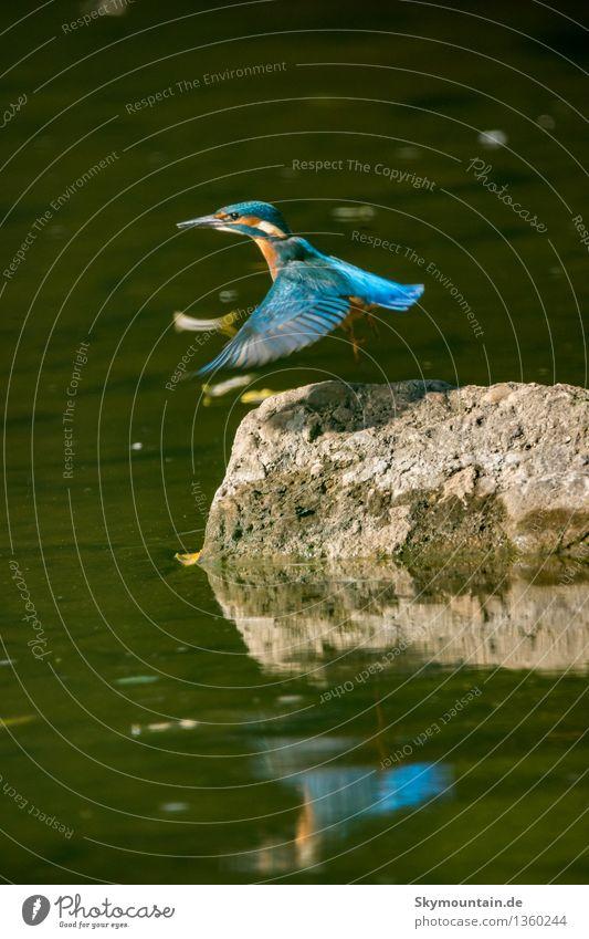 Abgehoben Umwelt Natur Landschaft Pflanze Tier Sonnenlicht Klima Klimawandel Wetter Schönes Wetter Seeufer Flussufer Bach Wildtier Vogel Tiergesicht Flügel