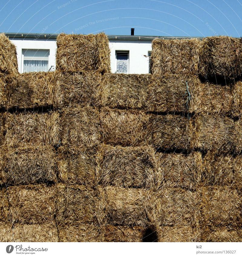 strohhütte Sommer Haus Fenster leer verstecken Halm Geborgenheit Lücke Stroh Barrikade
