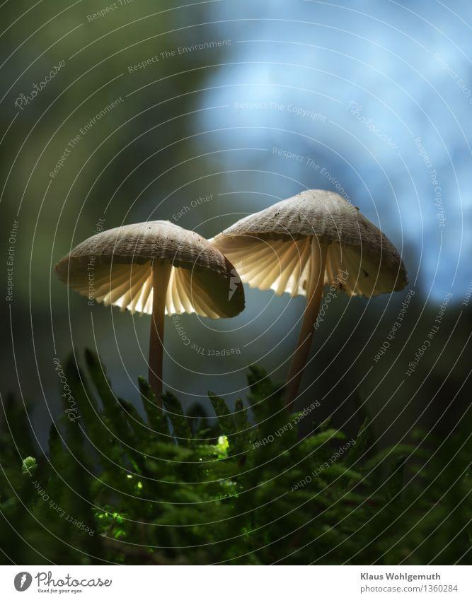 Traute Zweisamkeit mit wechselndem Hintergrund Umwelt Natur Pflanze Himmel Herbst Schönes Wetter Moos Moosteppich Wald leuchten stehen Wachstum schön blau grün