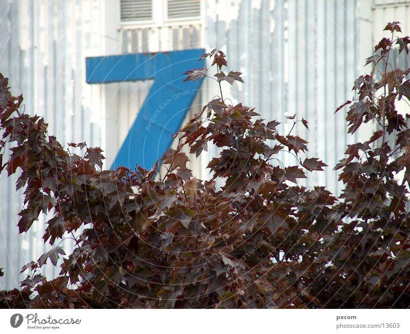 herbst *777 blau Blatt Herbst Leipzig Herbstlaub Messehalle
