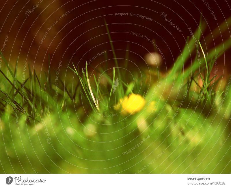 expressionistischer gelber fleck auf grünem grund Natur Sommer Blume Ferne Erholung dunkel Ernährung Spielen Freiheit Blüte Gras Frühling Park hell frei Freizeit & Hobby