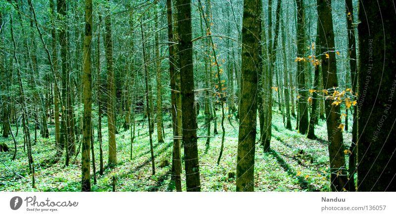 Irrwege Wald mystisch Märchen Märchenwald Blatt Luft wandern Wildnis grün Umwelt Umweltschutz Baumsterben Leben Unterholz Sommer Europa Natur Außenaufnahme