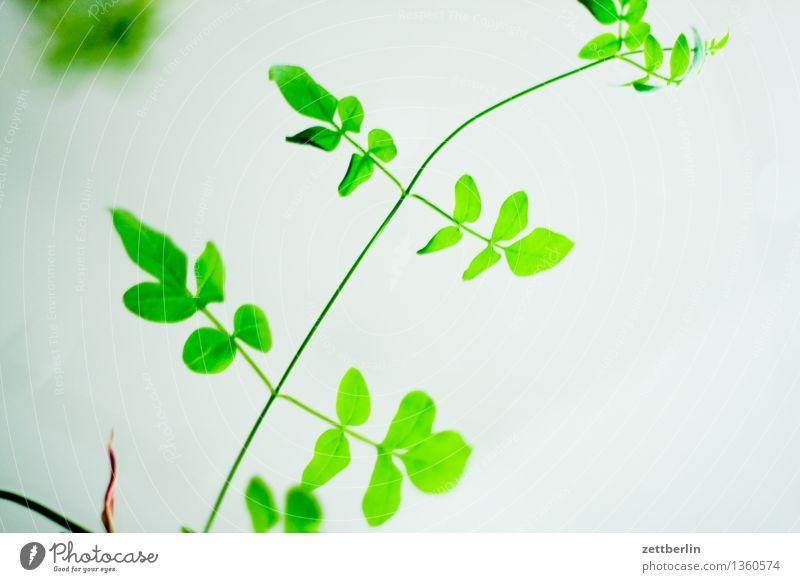 Giftgrün Pflanze grün Blatt Garten Park Wachstum Textfreiraum Neigung Zweig Balkon Stengel Blattgrün Ranke