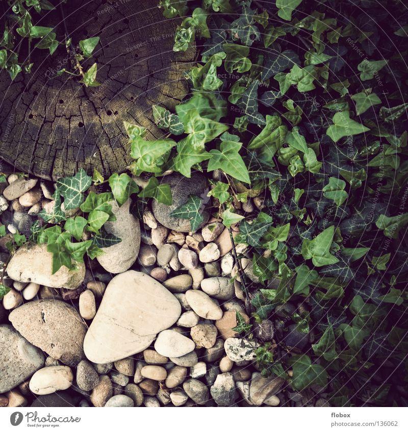 Gärtchen Natur alt grün Pflanze Holz Garten Stein Park gefährlich Bodenbelag rund retro Idylle ökologisch Kies Biologie