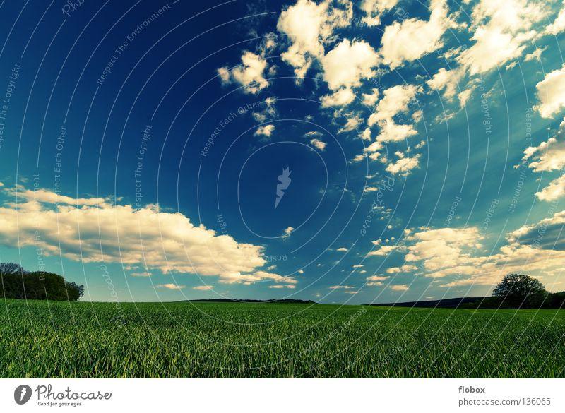 Greenish II Sommer Panorama (Aussicht) Wolkenhimmel Wolkenfetzen Schönes Wetter Ferne Feld Ackerbau Landschaft Natur malerisch Weitwinkel Zentralperspektive