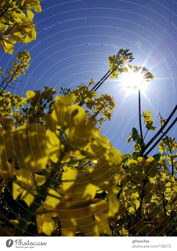SonnenÖl Natur Himmel Tier gelb Blüte Frühling Landschaft Feld Wetter Industrie Bauernhof Landwirtschaft Duft Erdöl Geruch