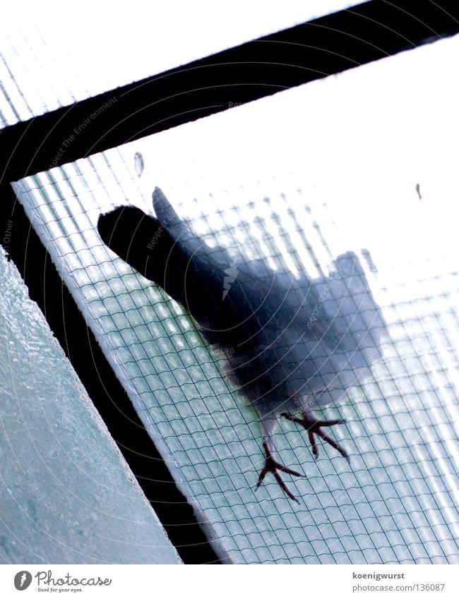 besser ne taube aufm dach als sonstwas Taube Milchglas Froschperspektive Vogel Balkon Glasdach Vergänglichkeit blau Fuß Feder fliegen