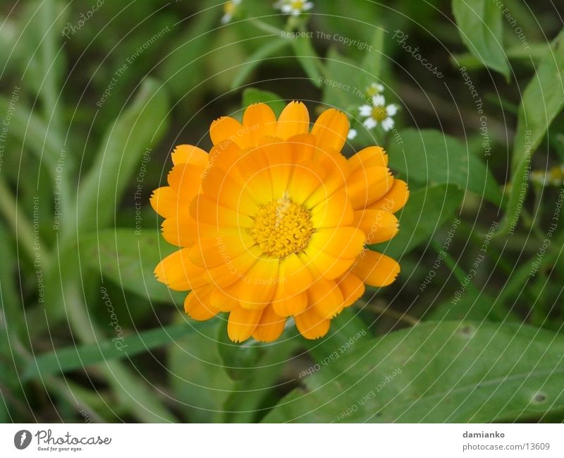 Blume Sonne Sommer Farbe Zoomeffekt